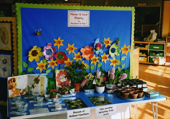 Reception and Year 1 Science Display